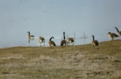 outardes1